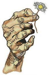 Hand with chamomile