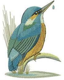 Kingfisher near lake