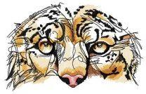 Snow leopard muzzle