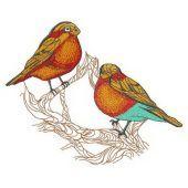 Birdie couple on tree branch