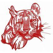 Wild tiger 4