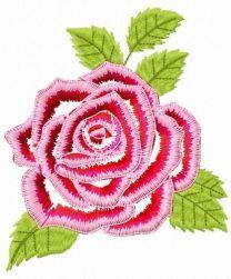 Gorgeous rose flower