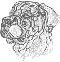 Rottweiler sketch