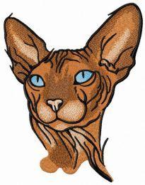 Sphynx cat 4