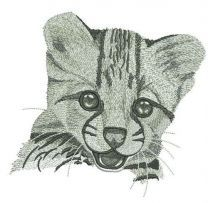 Young cheetah portrait