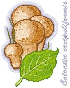Caluatia excipuliformis embroidery design