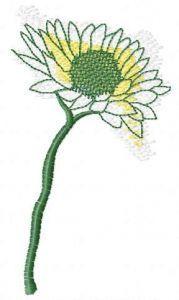 Chamomile sketch embroidery design