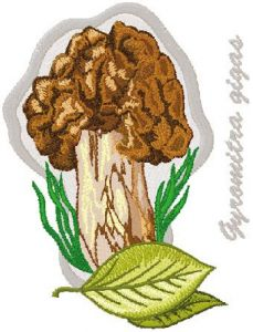 Gyromitra Gigas embroidery design
