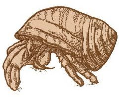 Hermit crab 2 embroidery design