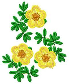 Hypericum embroidery design