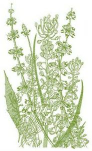 Sketch of field flowers embroidery design