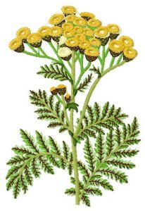 Tansy embroidery design